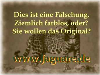 Stolzer Jaguar / Proud Jaguar